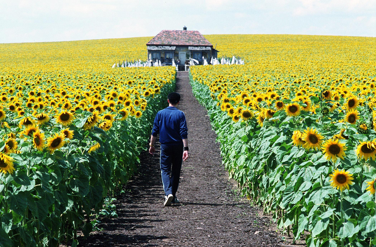 "Sunflower Field in Everything is Illuminated"" written and directed by Liev Schreiber"